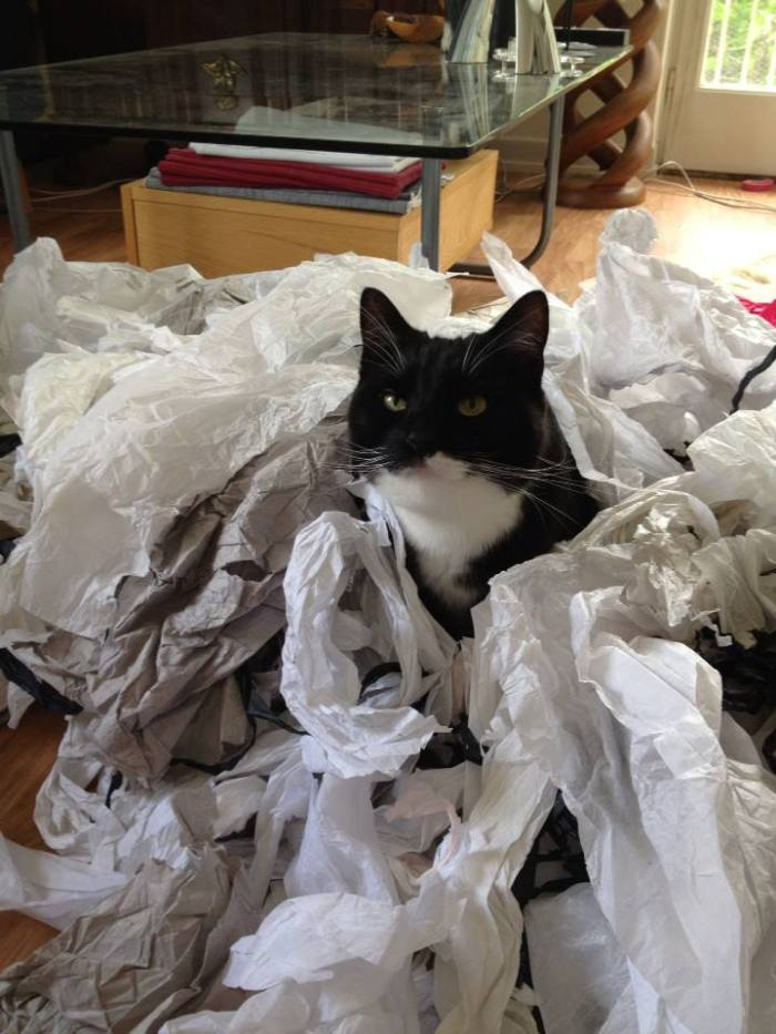 My cat really DOES love tissue paper :)