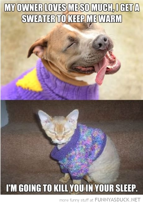 funny-pictures-dog-owner-loves-me-sweater-keep-warm-cat-kill-sleep