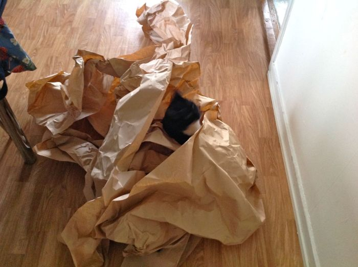 When I get parcels I usually give the cats the paper to play with until I can recycle it. They are inside cats so need to be constantly stimulated with play.