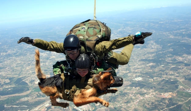 """Austrian special forces parachute dog. 'Dogs don't perceive height difference. ... They're more likely to be bothered by the roar of the engines, but once we're on the way down, that doesn't matter and they just enjoy the view. ... """"It's something [this dog] does a lot. He has a much cooler head than most recruits."""""""