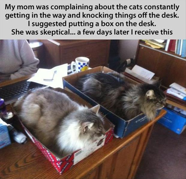 cats-and-boxes1