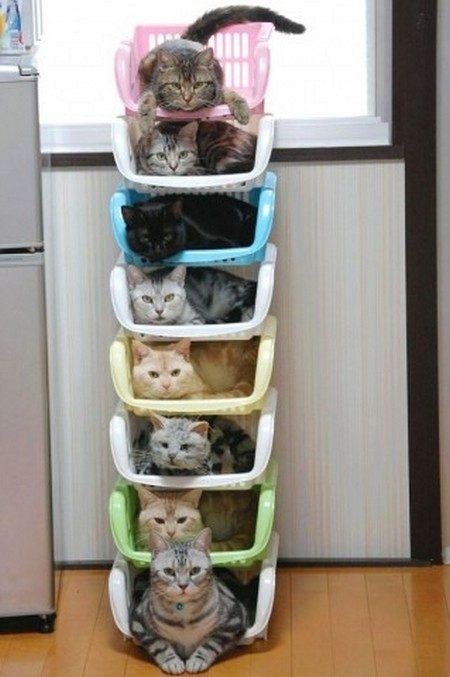 cats3.jpg.pagespeed.ce.ngr6Eu6pNCUk9DgZVOun