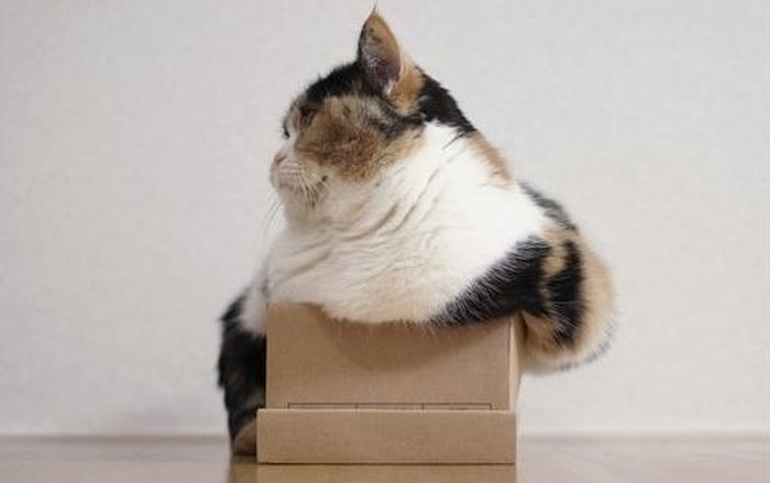 cats_in_boxes_01
