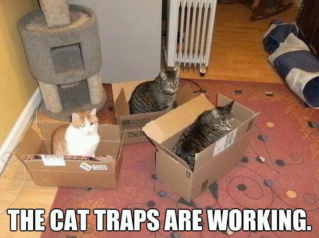 traps-cat