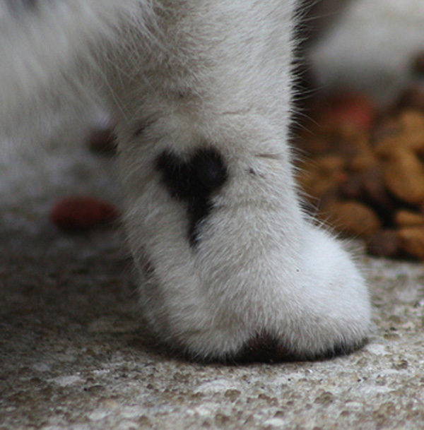 cats_hearts_on_fur_05