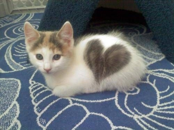 cats_hearts_on_fur_07