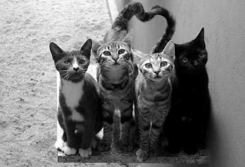 Heart-tails-heart-cats