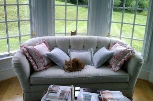 clandestine-cat-photobomb--large-msg-132632417625