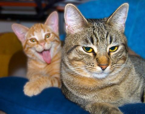 funny-cat-photobomb-1