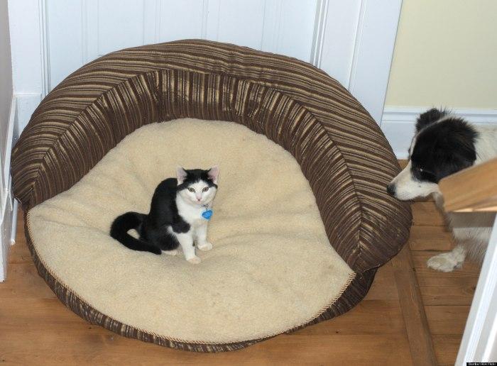 o-STOLEN-DOG-BEDS-facebook