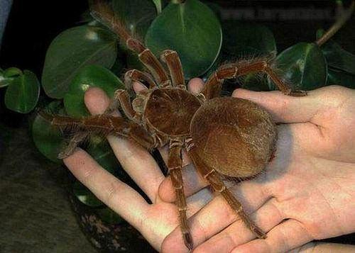 Spiderhands
