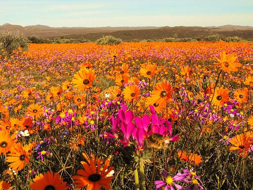 Namaqua-National-Park