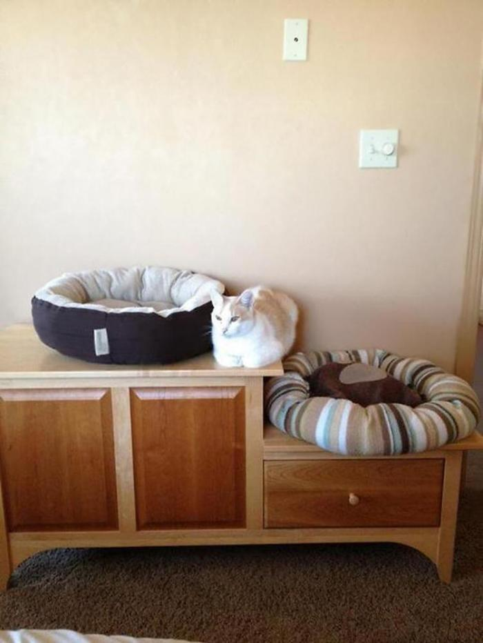 cat-logic-beds-6