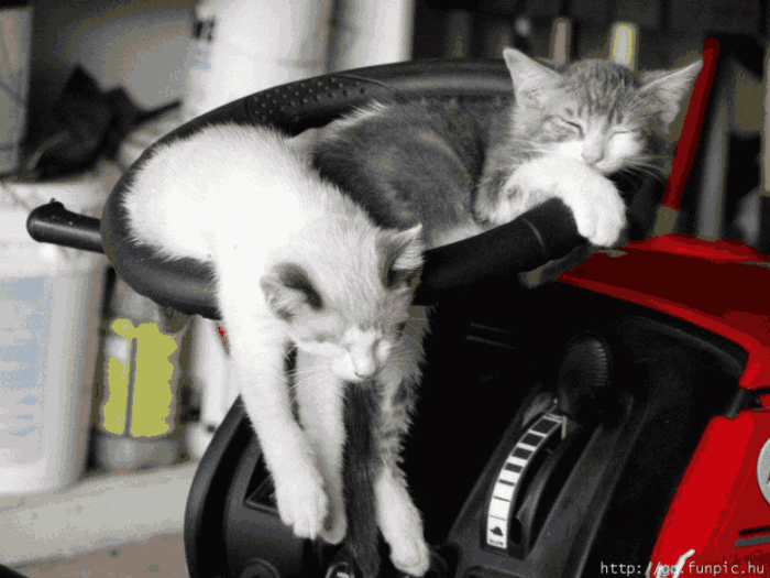 animals-cats-sleeping-kj