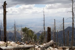 View from Mount Lemmon over Tucson plateau, Forest ravaged by fire a few years back, DSC_0219