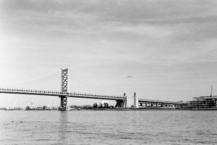 Benjamin Franklin Bridge and Seagull