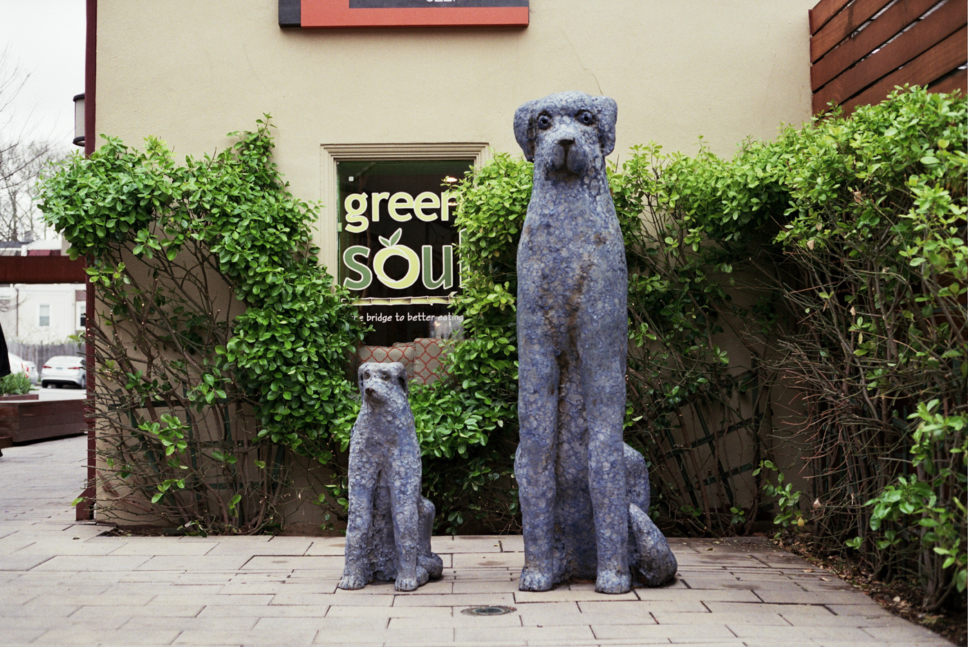 Dog Statues in Chestnut Hill