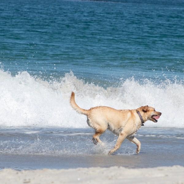 Happy Beach Dog