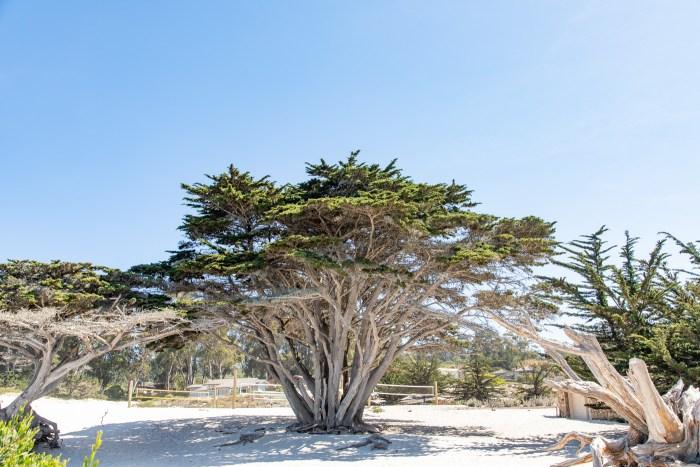 Carmel Beach City Park
