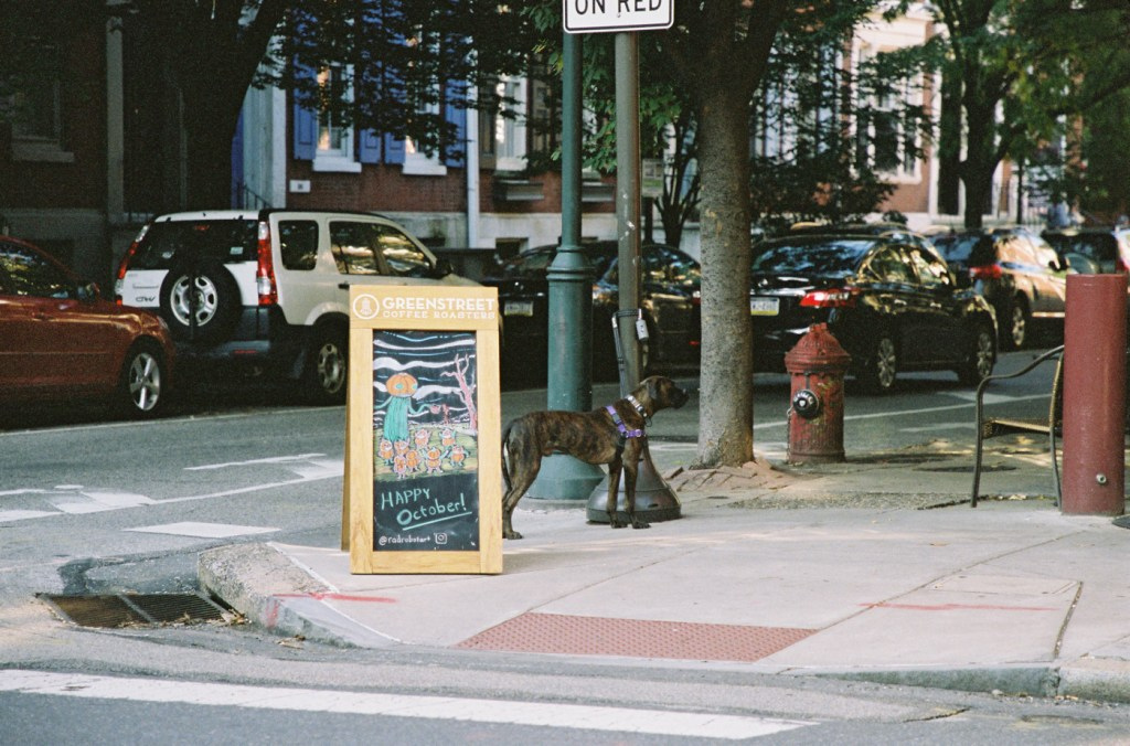 Greenstreet Coffee Roasters and a Dog