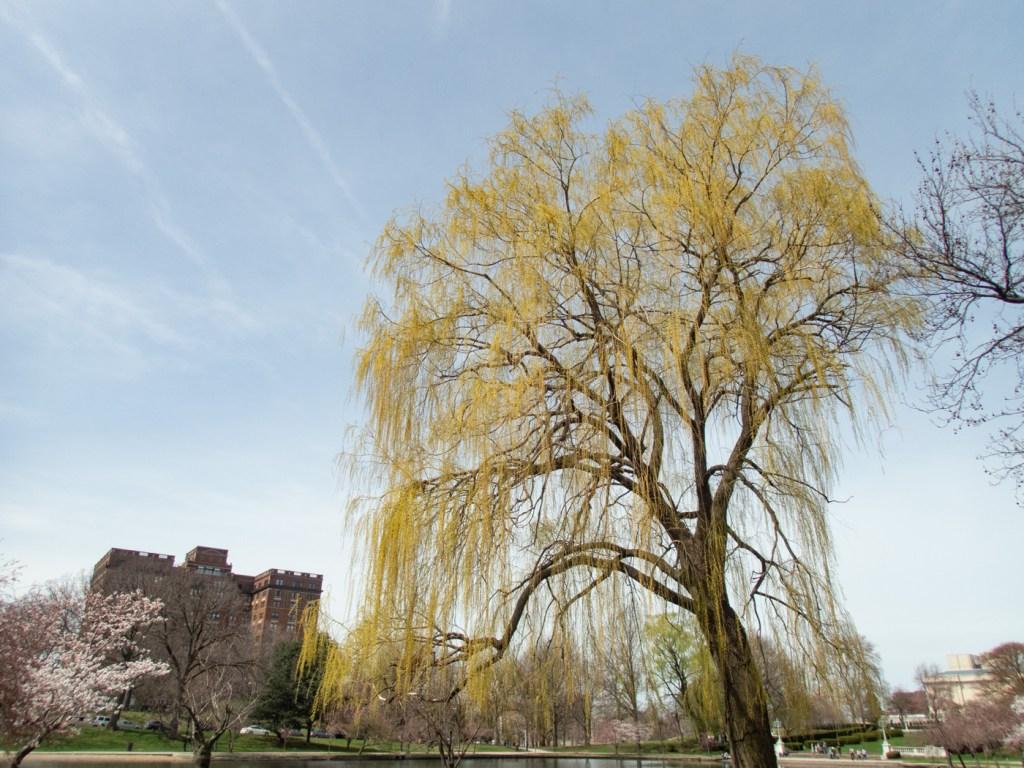 Tree at Wade Lagoon