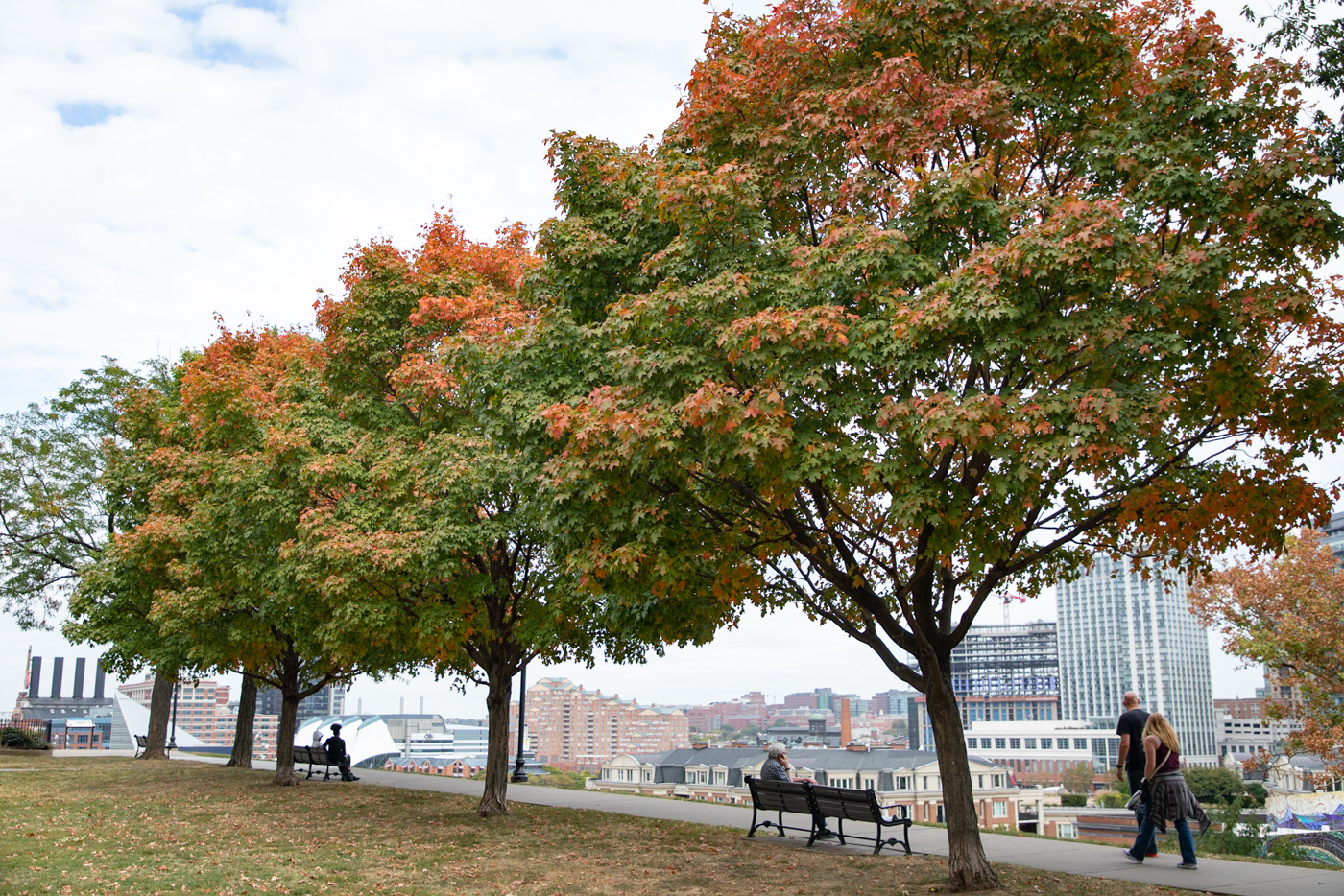 Trees on Federal Hill