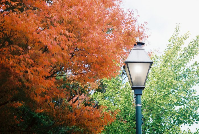 Autumn Tree and Lamppost