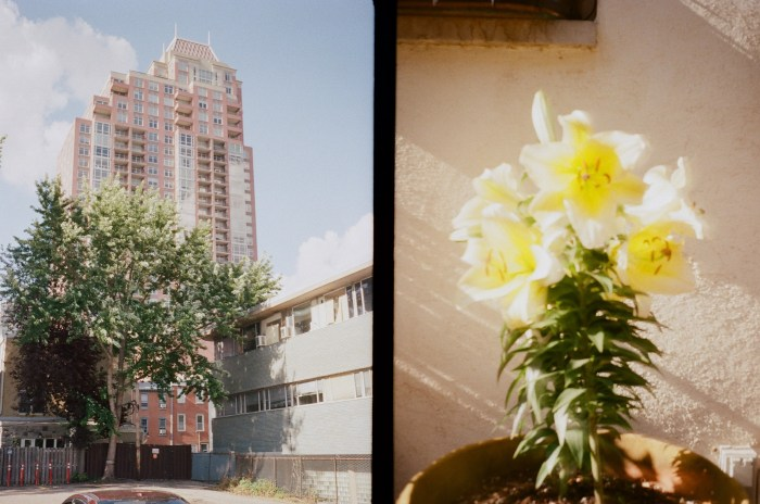 Symphony House and Flowers