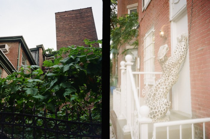 Vines and Overexposed Leopard