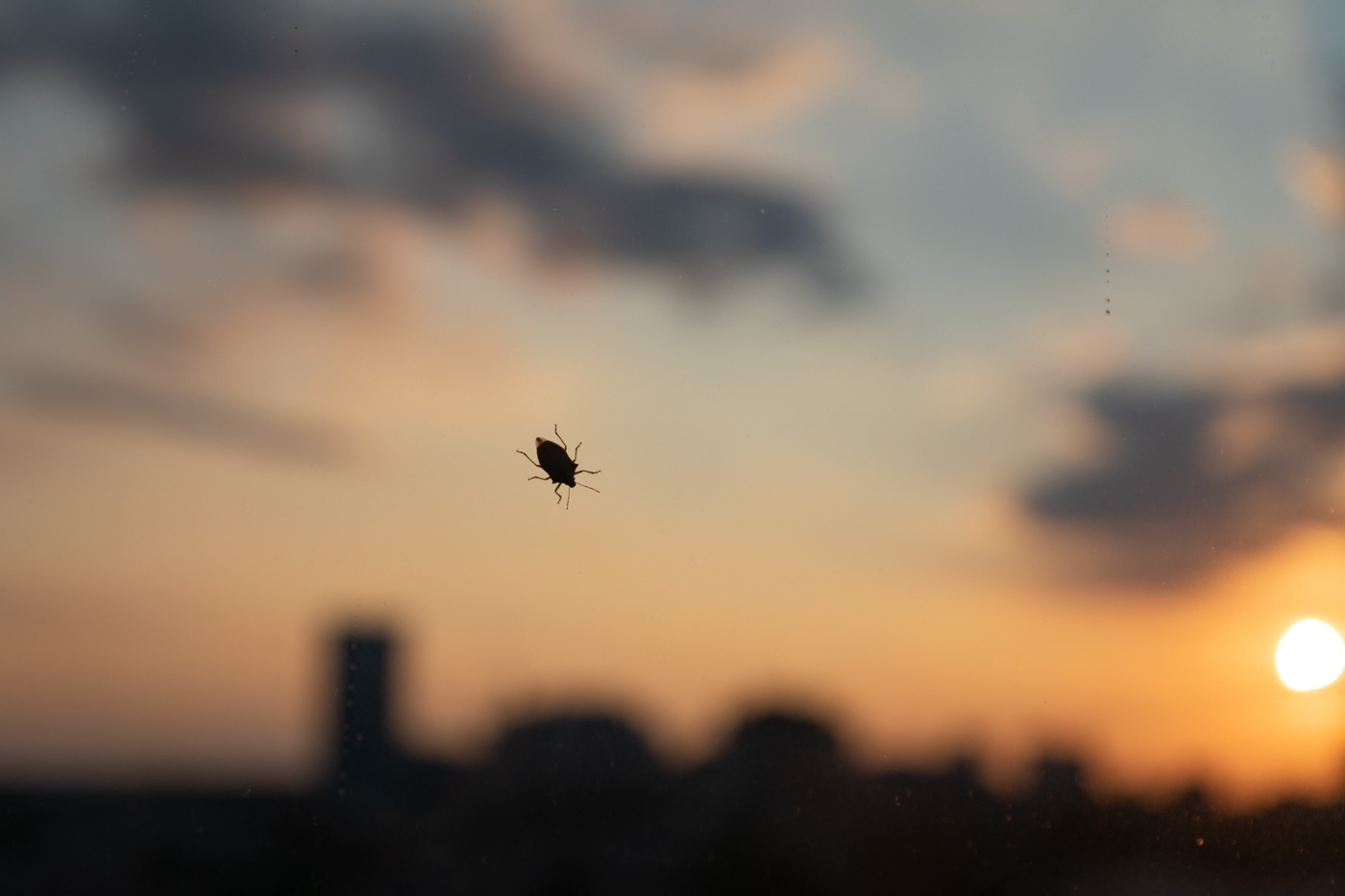 Bug on a Window