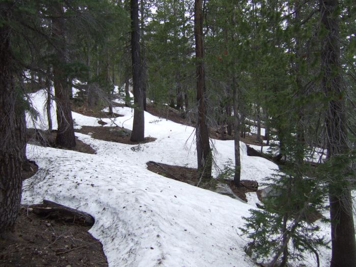 Snow in Yosemite May 2009