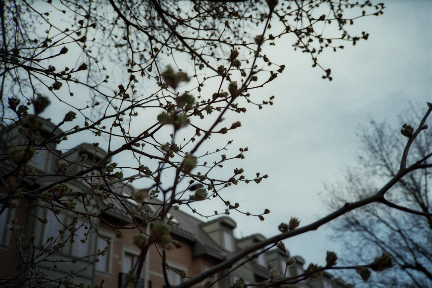 Early Spring Tree