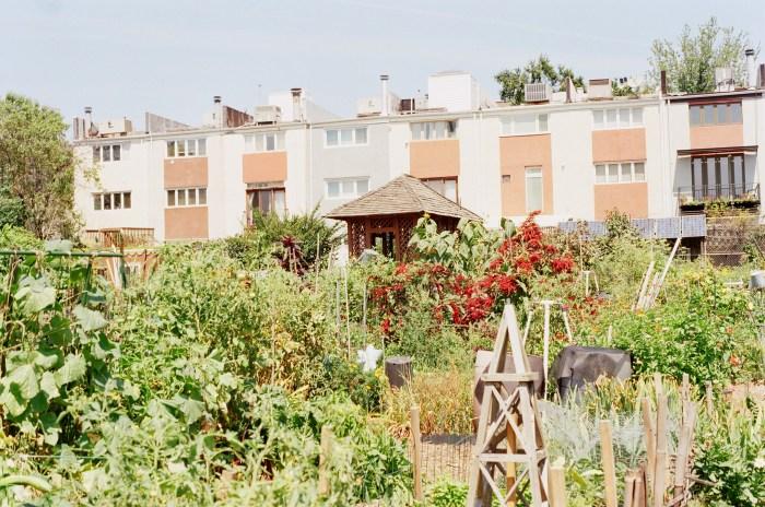 Southwark Community Garden