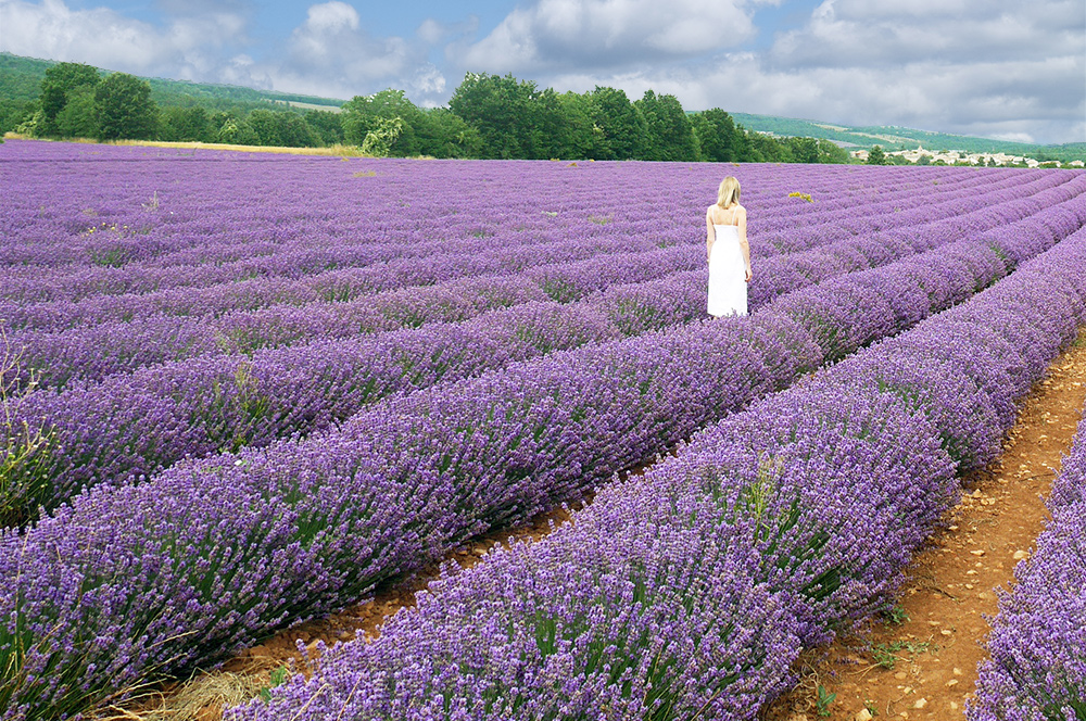 vacation ideas 2017 france lavender fields