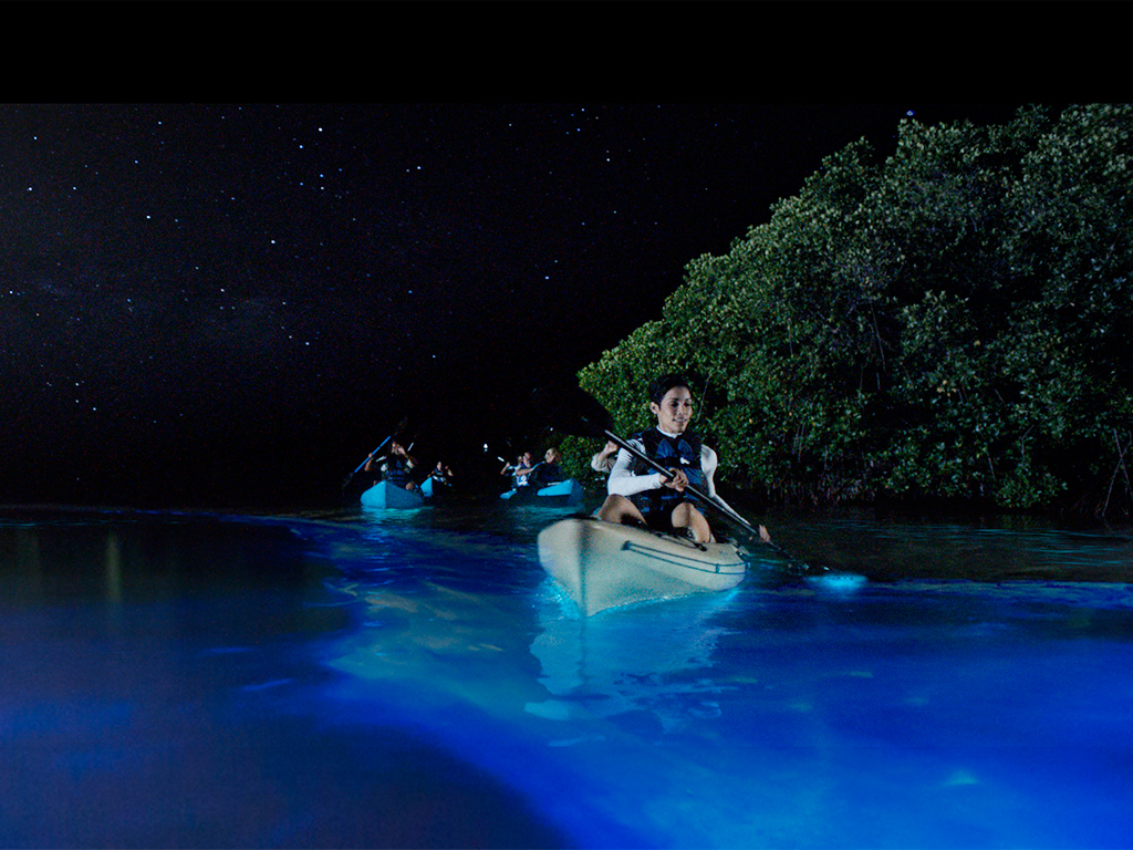 Bioluminescent Bay Tour Puerto Rico day trip