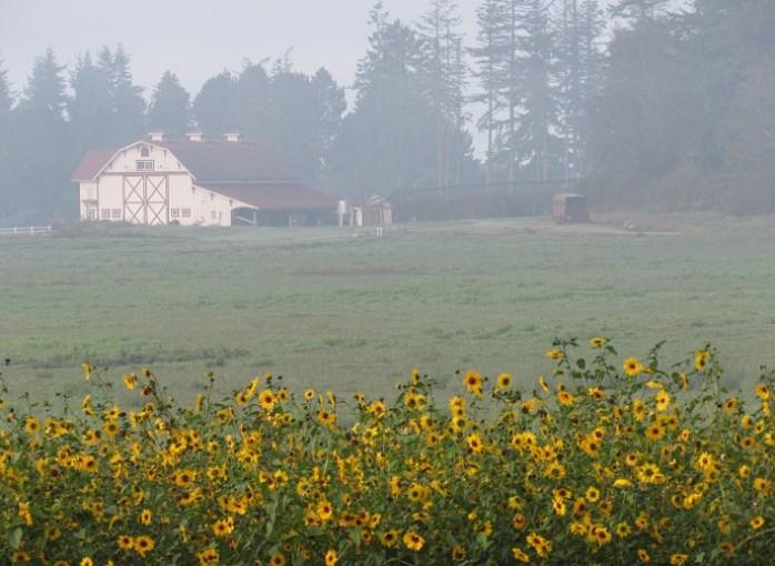 pasture pic seven