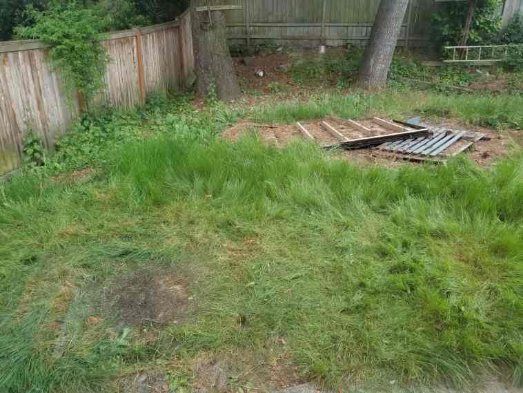 Before photo showing a backyard with overgrown grass and debris.