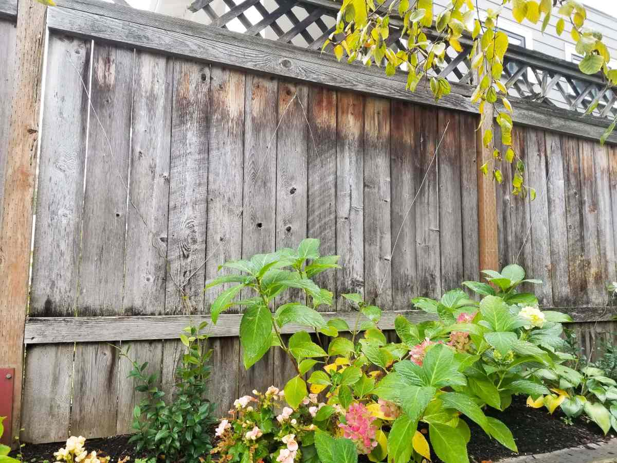 Fence with wire trellis in zig zag pattern. Hydrangea and other plants in foreground.