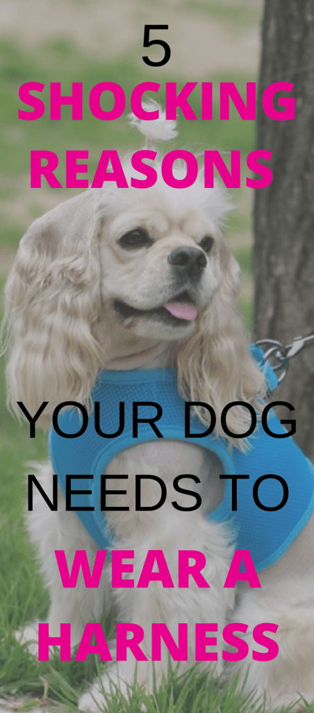 Are you putting your pet at risk? In this dog collar vs dog harness post, we'll explain 5 reasons your dog should wear a harness on your daily dog walks.