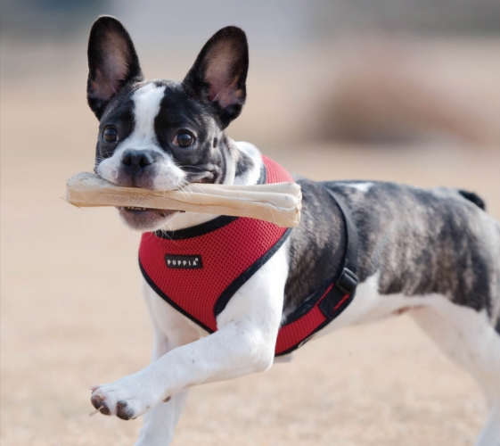 puppiasoftharnessred?fit=561%2C500&ssl=1 4 best dog harnesses that won't pull on your dog's neck