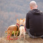 Hiking With Dogs: 5 Tips + What To Pack Before You Go