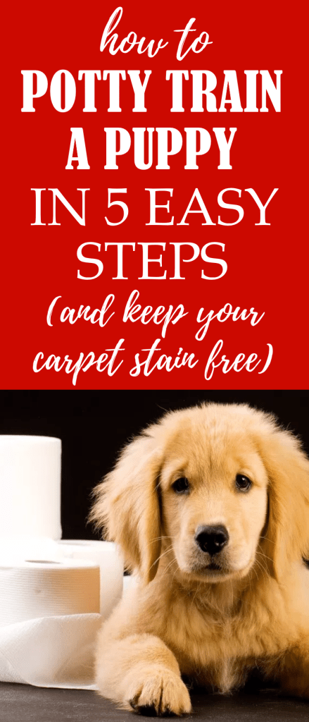 Potty training a puppy doesn't have to be difficult if you have the right knowledge. Find the best puppy potty training tips and schedule in this guide on How To Potty Train A Puppy in 5 Easy Steps (And Keep Your Carpet Stain Free). #puppypottytraining