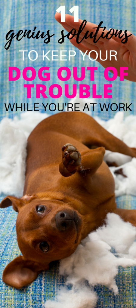 Is your dog a trouble maker when you're out of the house? Learn how to keep dogs busy while at work and out of trouble with these 11 genius solutions!