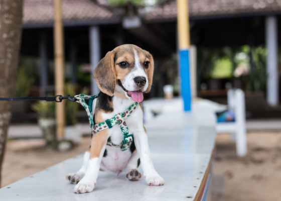 dog etiquette rules / proper dog walking etiquette