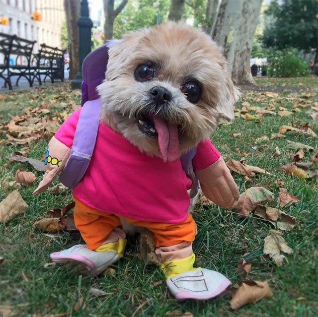 Small Dog Halloween Costumes