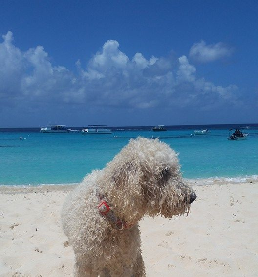 What to do in Grand Turk - Jack's Shack
