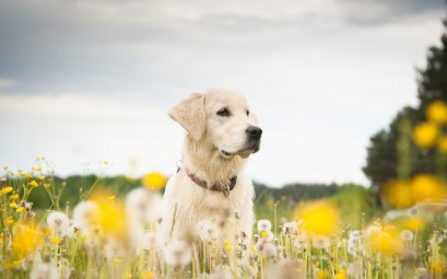 Young dog on the flower meadow