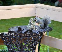 DSC_5461_20140819_squirrel