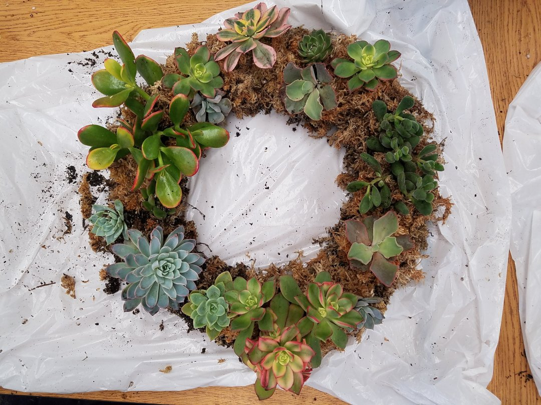 How To Make A Succulent Wreath In 3 Easy Steps This