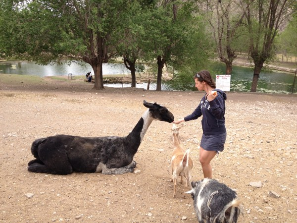 Animal therapy in the desert
